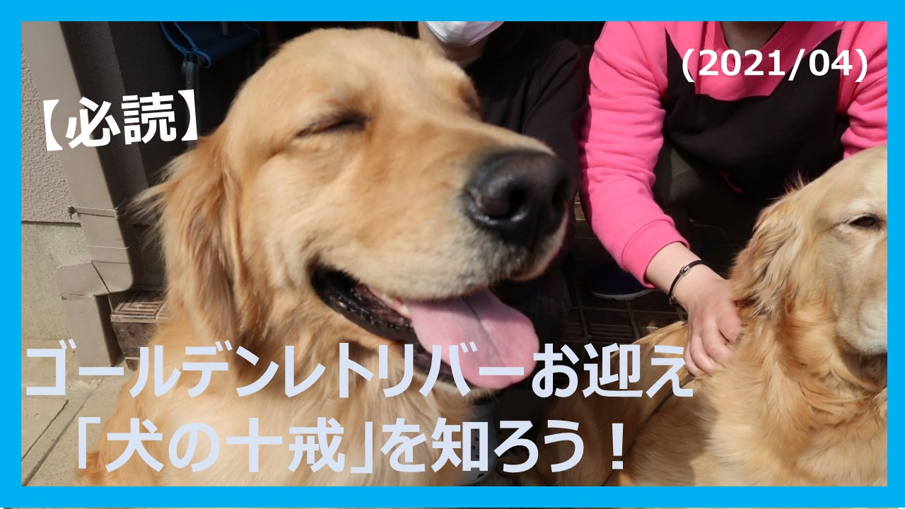 ゴールデンレトリバー犬の十戒