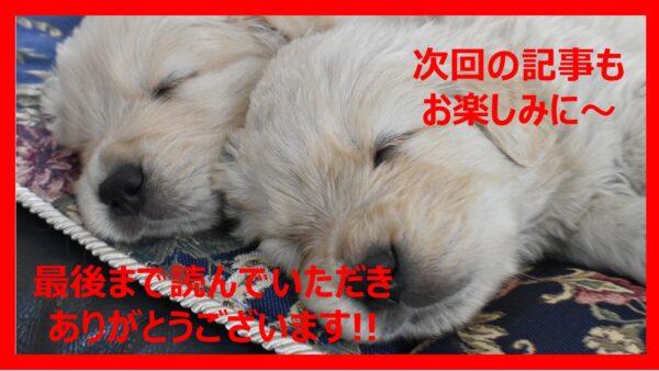 ゴールデンレトリバー子犬おすすめフード05