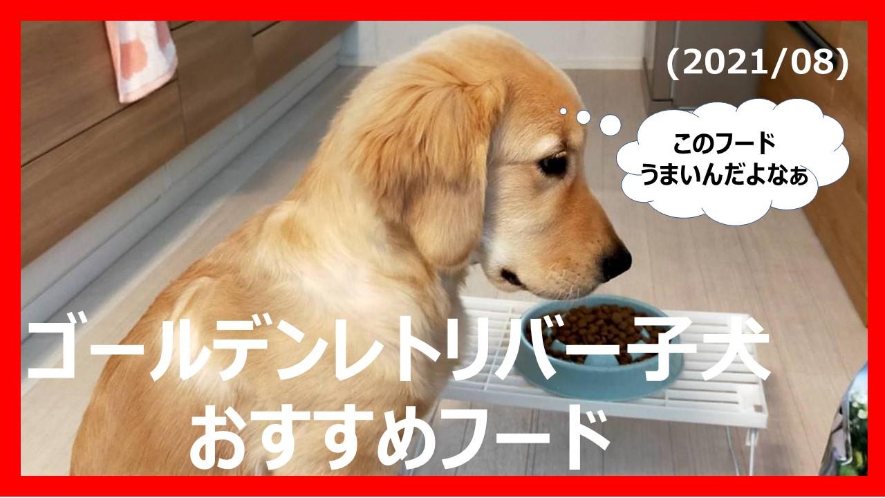 ゴールデンレトリバー子犬おすすめフード01