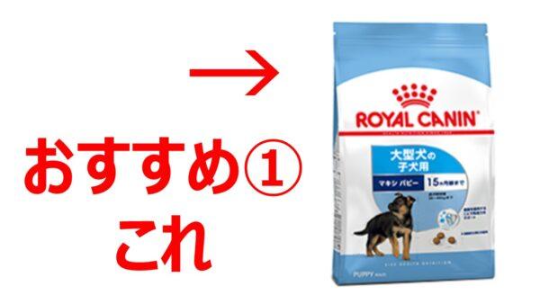 ゴールデンレトリバー子犬おすすめフード02